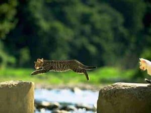 2010 cat pic 07