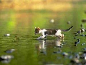 2010 cat pic 09