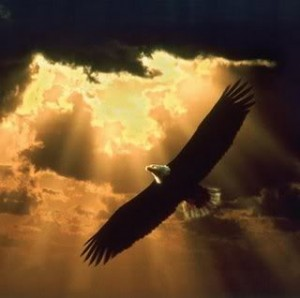 His Eagles Wings Of Love