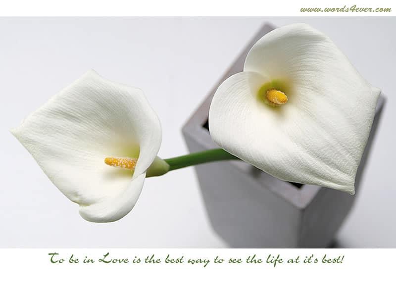 Beautiful Quotes 03