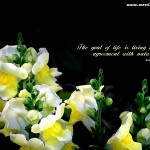 Beautiful Quotes 04