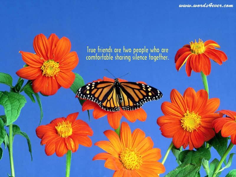 Beautiful Quotes 08
