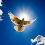 Holy Spirit Dove flying
