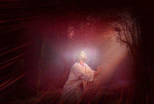 Jesus in Prayer Forest