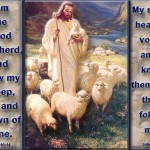 Jesus Good Shepherd 16