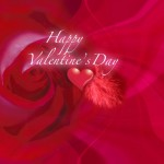 Valentines Day Backgrounds 03