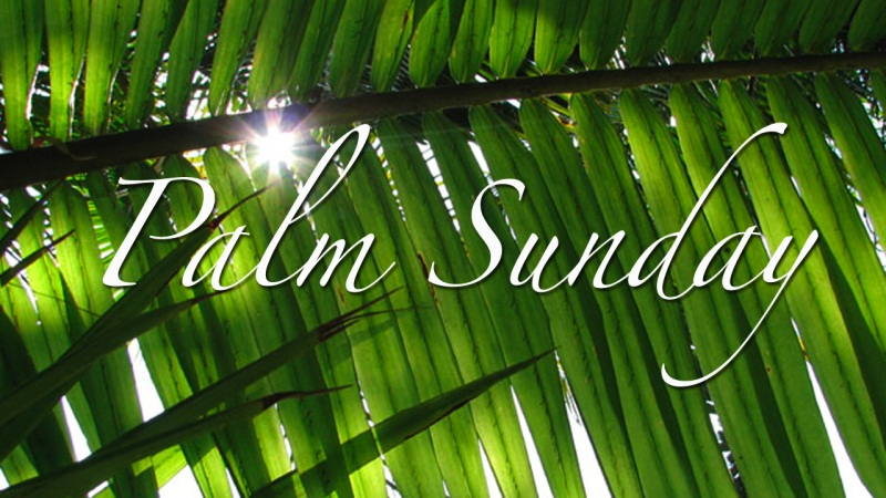 palm wallpaper. Palm Sunday Wallpaper 04